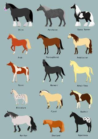 Horse breeds set with breed name Ilustração