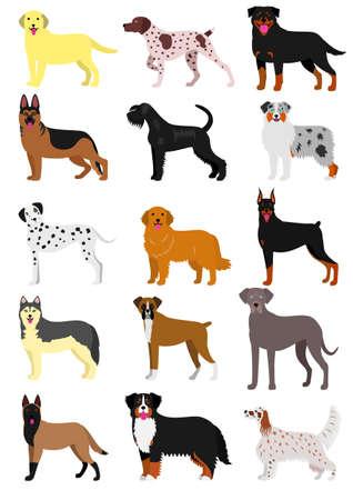 bernese: dog breeds set.