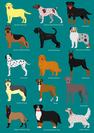 dog breeds set with breeds names