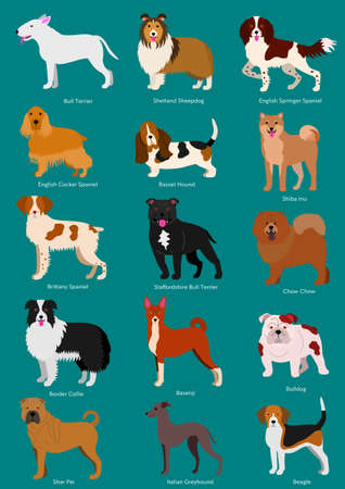 medium dog breeds set with breeds names