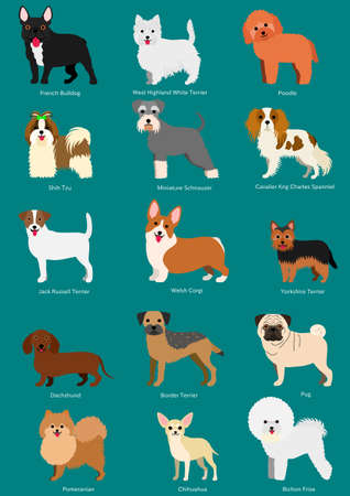 small dog breeds set with breeds names