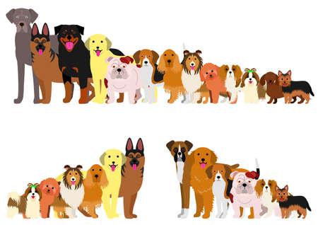 Borde de perros dispuestos en orden de altura