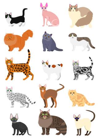cats breeds set