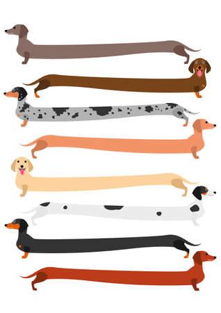 very long colorful Dachshund set