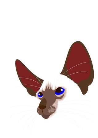 Siamese cat face vector