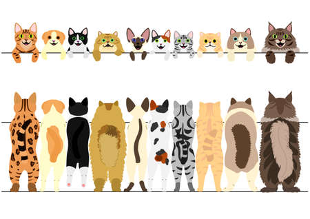 Standing cats front and back border set illustration.