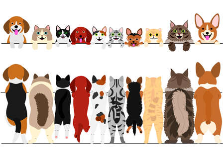 Standing small dogs and cats front and back border set illustration.