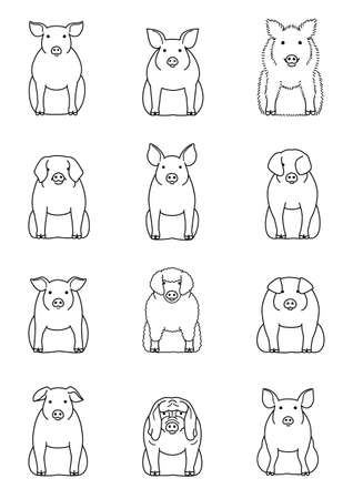 Various breeds of pigs vector set. 일러스트