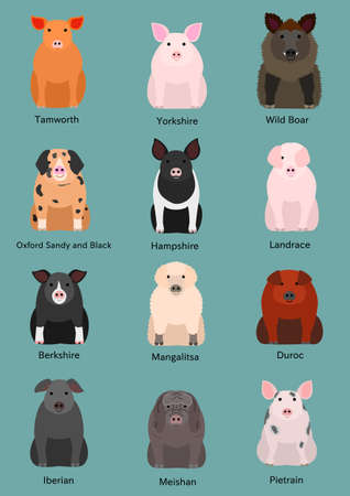 Various breeds of pigs vector set. Illustration