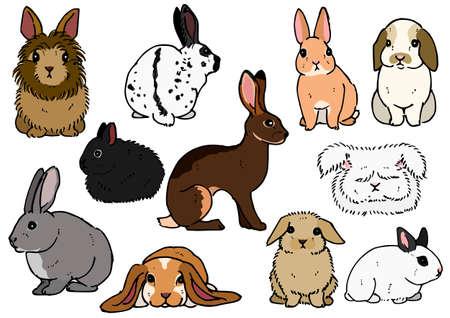 varias razas de conejos
