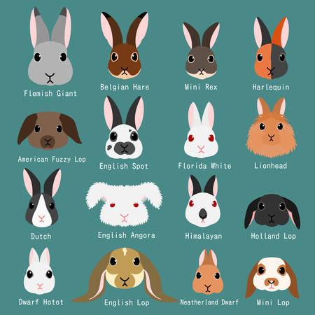 rabbits breeds set