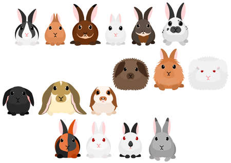 Different kinds of rabbits border set