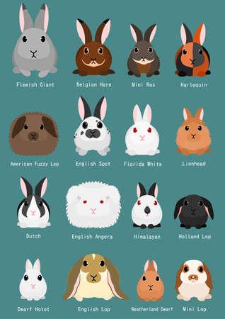 Rabbits breeds chart