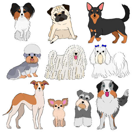 group of small dogs hand drawn Vector illustration. Illustration