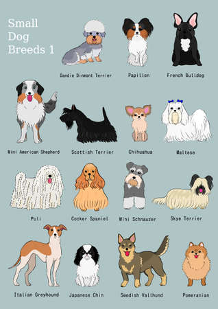 group of small dogs breeds hand drawn chart Reklamní fotografie - 97767614