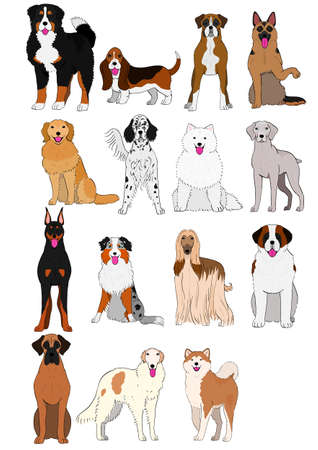 group of large and middle dogs breeds hand drawn