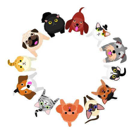 sentado pequeños perros y gatos mirando círculo