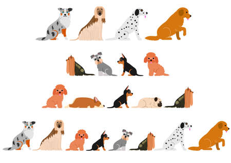 Various dogs border set isolated on white