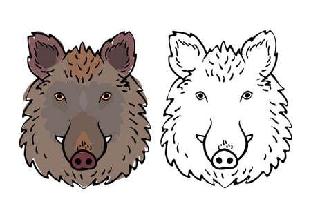 wild boar head drawing set