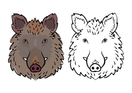 wild boar head drawing set