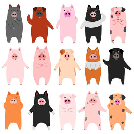 set of funny pigs