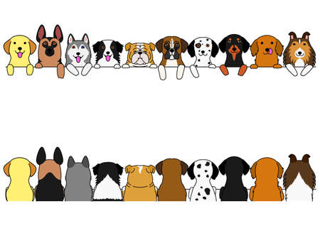 border set dogs, large dogs, front side and back side