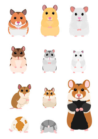 collection of hamster breeds