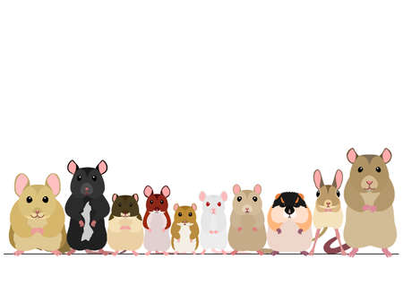 border of mice breeds