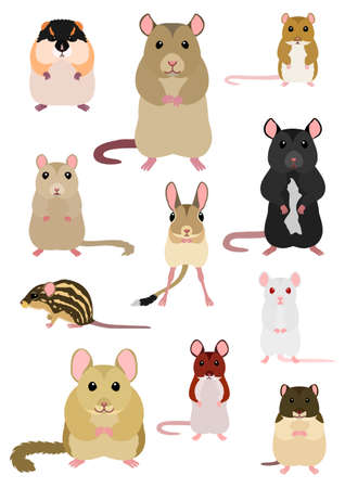 collection of mice breeds