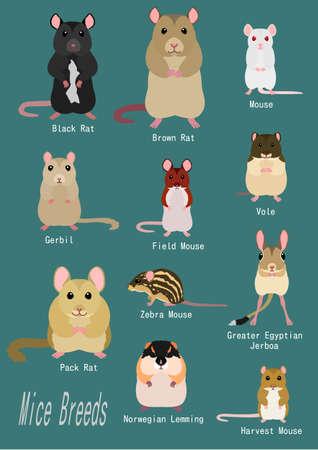 Sammlung von Mäuserassen Vektorgrafik