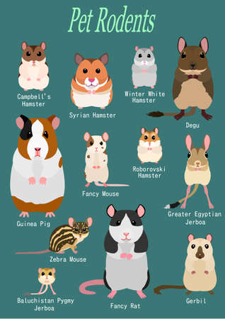 collection of pet rodents Banque d'images - 115779267