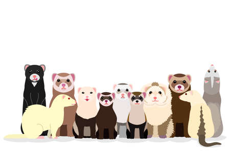 group of various ferrets