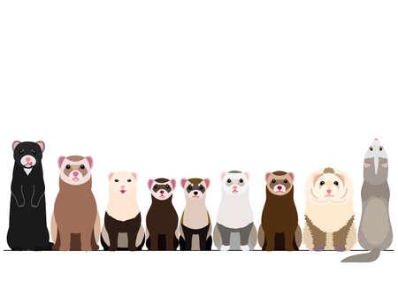 border of various ferrets Illustration