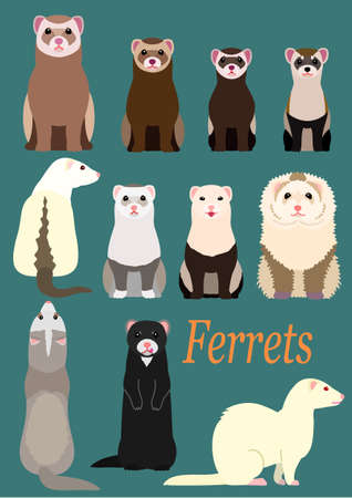 collection of ferrets Illustration