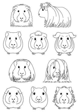 Sammlung von Meerschweinchen Vektorgrafik