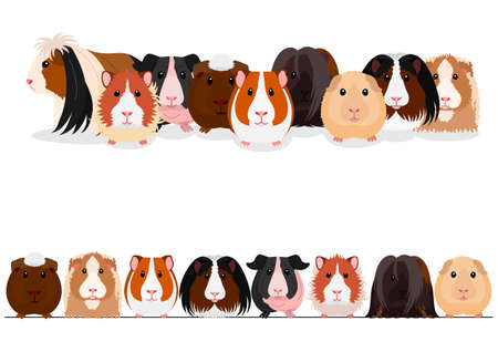 set of guinea pigs group and border Banque d'images - 115779298
