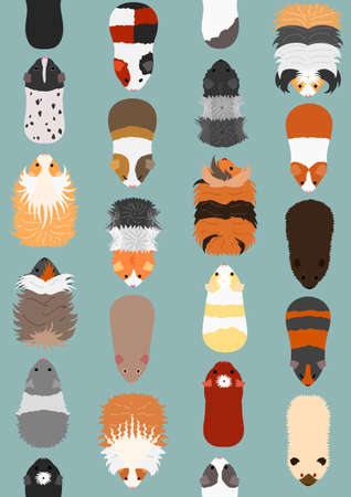 seamless pattern of guinea pigs