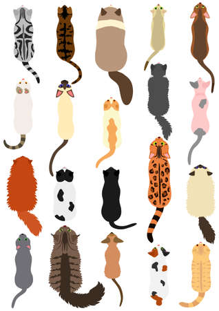 cats breed top view set Illustration