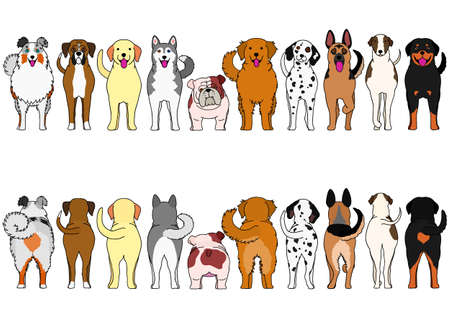 dogs breed border set with colors
