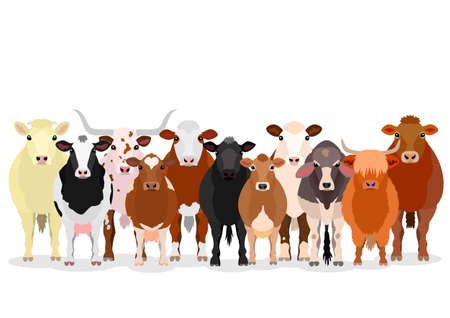 various cattle group