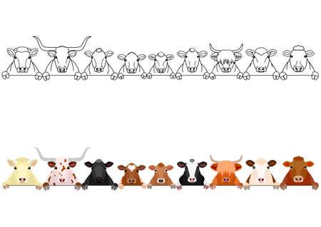 divers bovins d'affilée