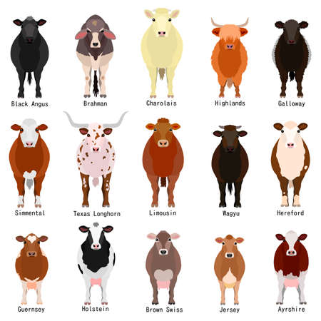 tabla de ganado con el nombre de las razas Ilustración de vector