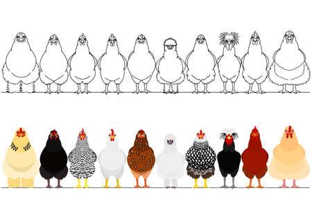 verschiedene Hähnchen hintereinander Vektorgrafik
