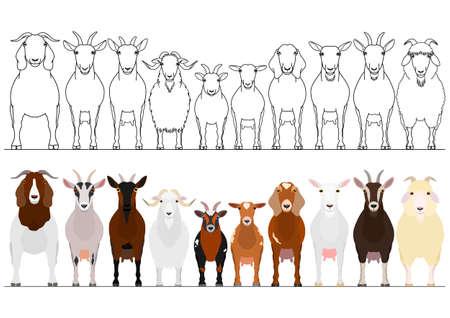 various goats border set