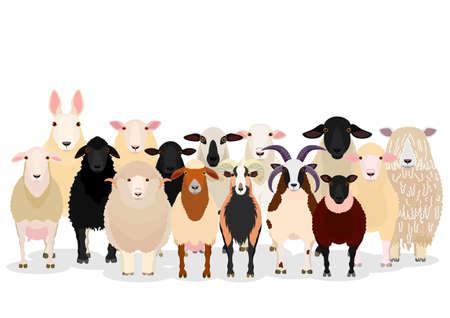 various sheep group Illustration