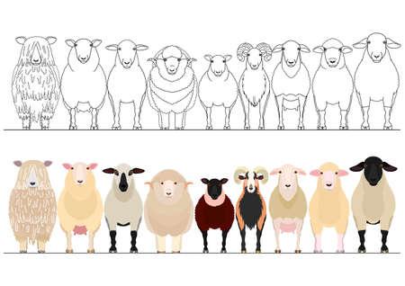 divers ensembles de bordures de moutons