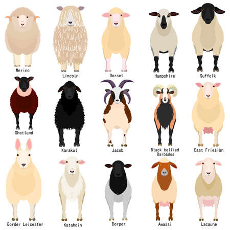 sheep chart with breeds name Vettoriali
