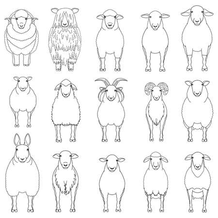 sheep chart with breeds name Иллюстрация
