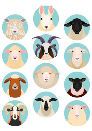 sheep heads set Illustration