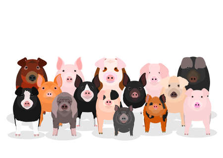 various pig group  イラスト・ベクター素材